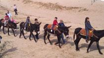 Paseada de burros en la playa de Tossa de Mar