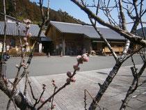 道の駅「花桃の里」