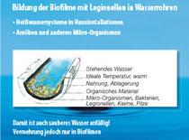 Biofilm-Bildung in Wasserrohr-Ablagerungen