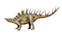 Bild eines Kentrosaurus
