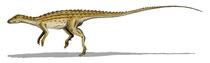 Bild eines Scutellosaurus