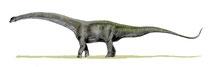 Bild eines Futalognkosaurus