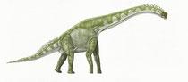 Bild eines Cedarosaurus