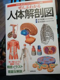 解剖図 二重あご 豊橋 たるみ改善専門サロン エステ 整体 骨格