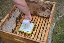 Bienen Selbstversorger