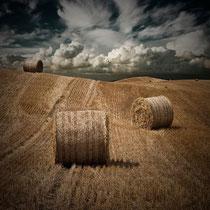 Harvest in Northern Ireland