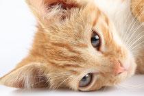 Rote Katze, Bildquelle: fotolia.com