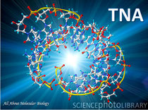TNA molecule, computer artwork G110/0893 Rights Managed. Credit: PASIEKA/SCIENCE PHOTO LIBRARY
