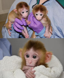 Top: Roku and Hex. Bottom: Chimero. (Credit: Images courtesy of Oregon Health & Science University)