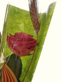 Роза Святого Георгия