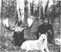 Охотник И.Н. Каплин, после удачной охоты на лося.
