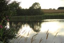Teich unserer Fischzucht mit Schilfgürtel und Weiden