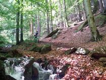 Kurz vor Ilsenburg: Vorsicht vor nassen Blätterhaufen!