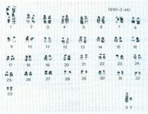 Chromosomen einer männlichen Zwergmaus (G-banding)