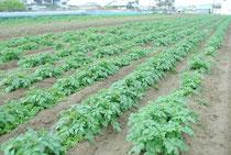 岡山市にあるミモレ農園
