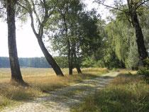 Europäischer Radwanderweg? 7 km Pflasterstraße zwischen Rheinsberg und Braunsberg