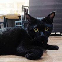 銀鐘堂の黒猫
