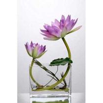 Lotus dans le vase