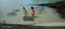 MANUKAI HAWAII ISLAND TORUS