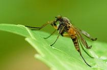 Insekten können im Sommer lästig sein