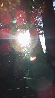 伊勢神宮で撮影すると、なんと・・・光の環が現れた♪太陽神さまなの?