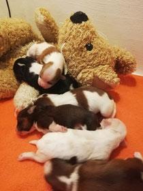 Unsere Babys sind schon 4 Tage alt