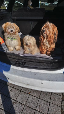 Hugo mit seinen Halbbrüdern Gonzo und Emil ❤️