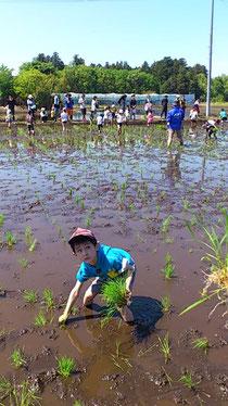 画像:子ども達の田植え体験