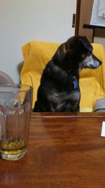 写真:愛犬「がぼ」ちゃん