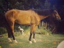 Das Pferd vor der Behandlung