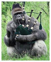 Gorilla-Piper