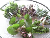 採れ立ての山菜