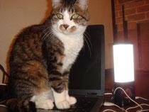 あとララ君の趣味追加、パソコンで爪とぎ!