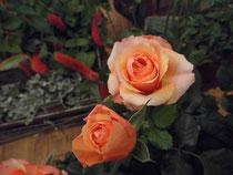 rose フォーエバー