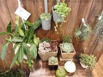 素敵な植物達が仲間入りしましたよ~