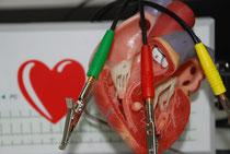 Herzmodell mit digitalem EKG im  Hintergrund