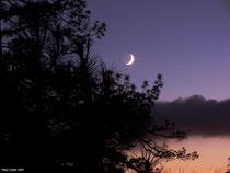 Luna creciente al atardecer