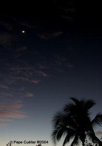 Palmera,Luna y Venus