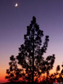 Luna creciente al atardecer y árbol