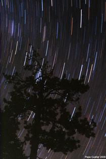 Trazos de estrellas y árbol