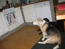 Luzi und Toni liegen in der Küche und schauen den Herd an.