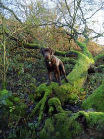 Toni steht auf einem mit Moos bewachsenen Baumstamm