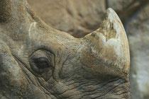 Detalle cuerno de rinoceronte / (cc) Jim Epler