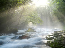 River flowing fast over rocks with sunlight streaming down through trees