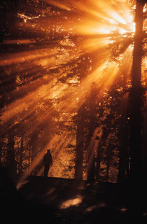 Man bathed in a burst of sun shining through the forest trees