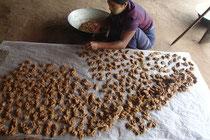 チャウパダン精製工場でタンニャを一つ一つ手作りしている