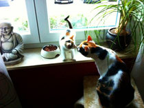 Lilly & Mäuschen