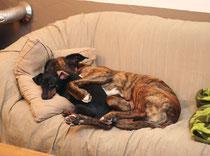 Iggy & Cooper