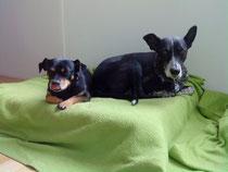 Negrio & Spike