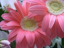 きれいなお花をありがとう♪